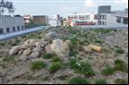 Biotoptak, växttak för urban miljö, Veg Tech AB