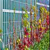 Kohlhauer Planta planterbara bullerskärmar