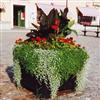 Hammarby Bruk blomlådor och urnor, HB 605 Spirea