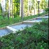 Seduna Skogsmatta i slänt med förodlade skogsväxter