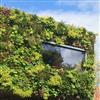 Seduna Gröna fasader, växtväggar