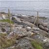 Skandinaviska Områdesskydd Viltstängsel