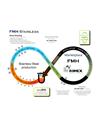 FMH Rimex Environmental Policy