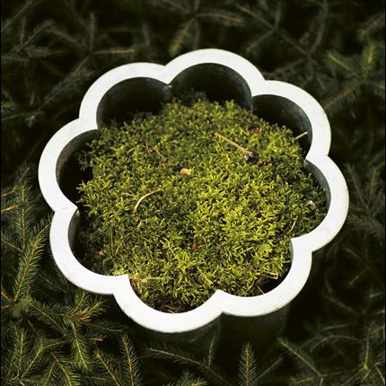 Byarum Gråsippa växtkärl