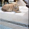 Anrin DRAIN avvattningsrännor, Tjeckien zoo