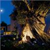 Fox Belysning Shaker belysning mot träd