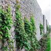 Gabioner Fristående murar
