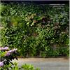 Gröna fasader biotopvägg