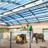Scanlight Dagsljustak i elefanthus