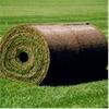 Gräscenter gräs