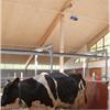 Träullit Agro, ladugård för mjölkproduktion