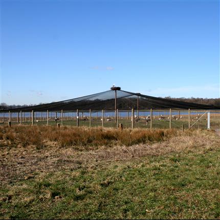 ScanCord fågelskyddsnät