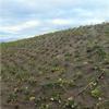 BioWeedStop ogräsduk/erosionsduk