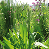 Urban Biotoper, gröna tak