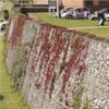 Vector Wall® gabioner med naturlig växtlighet