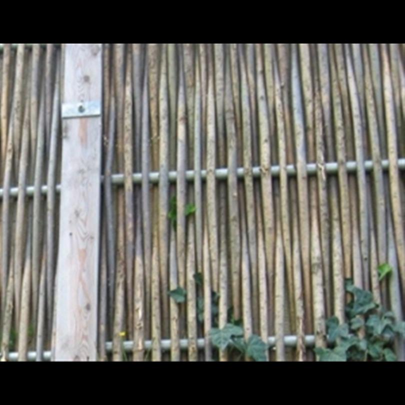 bg bullerskydd av pilträd detalj