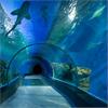 Tunnskiktsbeläggning med kemikalieresistens i akvarium, den blå planeten