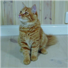 Gammeldags Träsåpa, katt