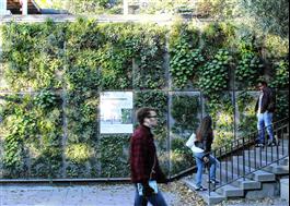 Butong Växtvägg, Björns Trädgård i Stockholm