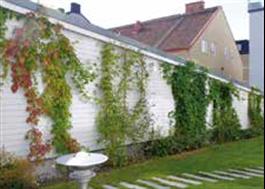 Gröna Vajern Serie 120