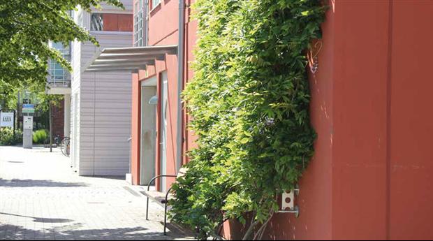 Gröna Vajern från Veg Tech