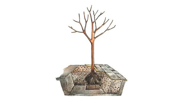 Bättre tillväxt för träd i stadsmiljö