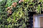 Gröna väggar med inbyggd bevattning